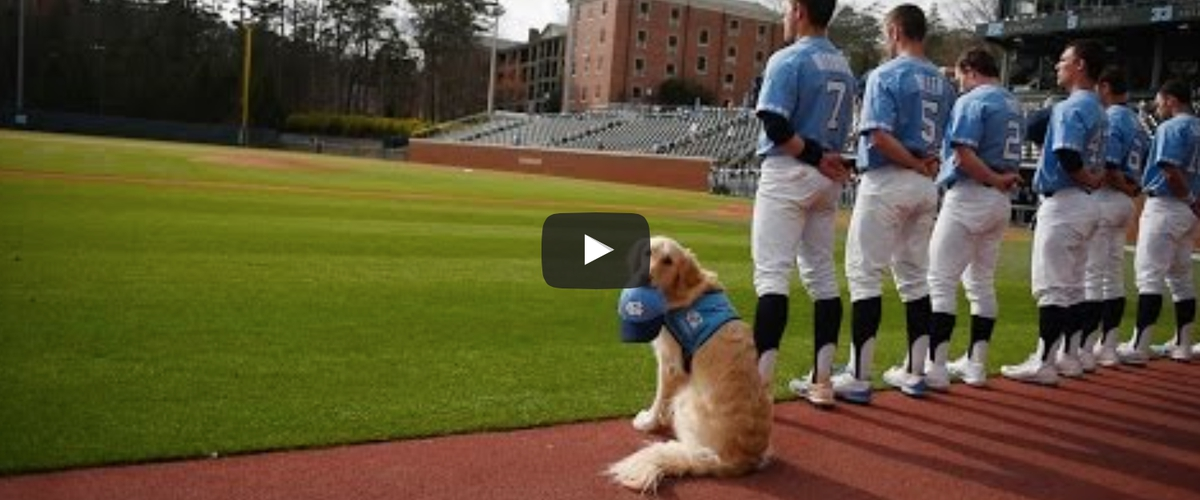 UNC Baseball Has A Mascot Dog Named Remington, And He's Nothing Short Of Awesome